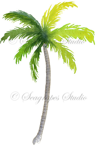 Trees . Palm clipart watercolor