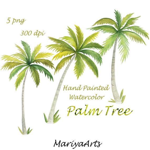Palm clipart watercolor. Tree clip art hand