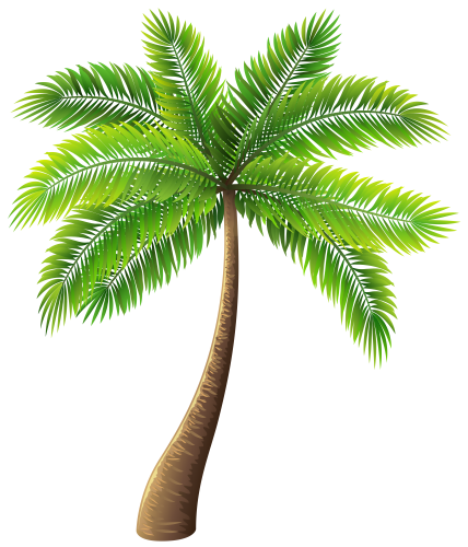palm tree vector png