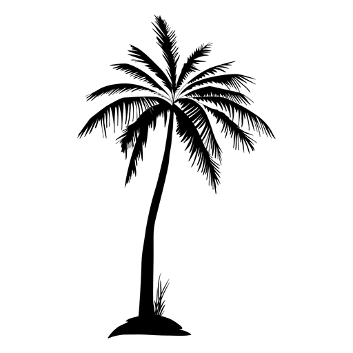 Black isolated silhouette transparent. Palm tree vector png