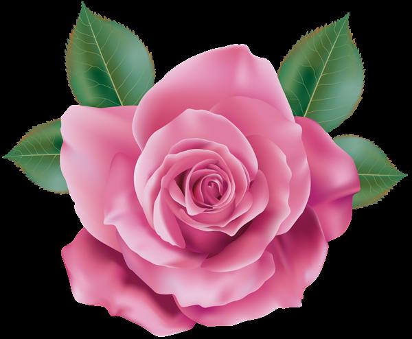 Paper flower png. Flowers pink rose transparent