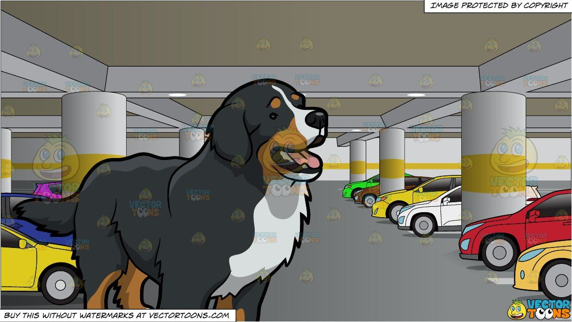 An Intrigued Bernese Mountain Dog and An Underground Parking ...
