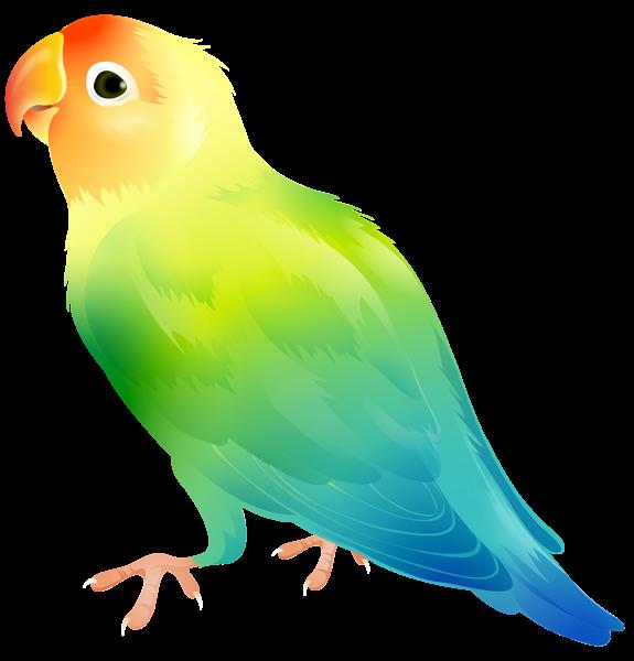 Bird png clip art. Parrot clipart