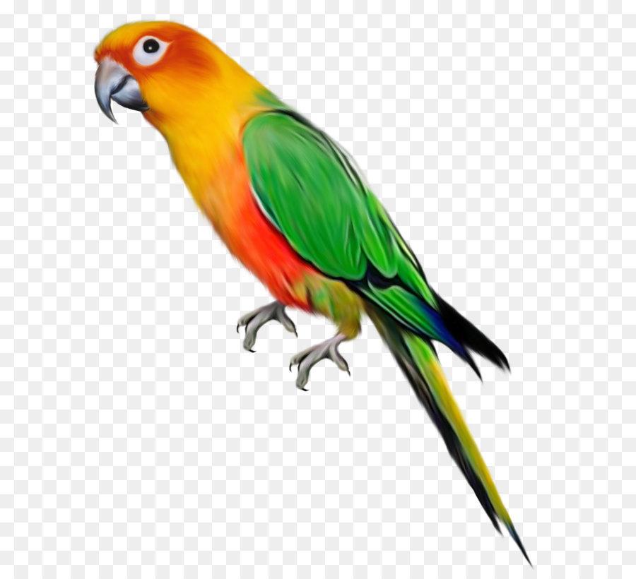 Bird clip art large. Parrot clipart