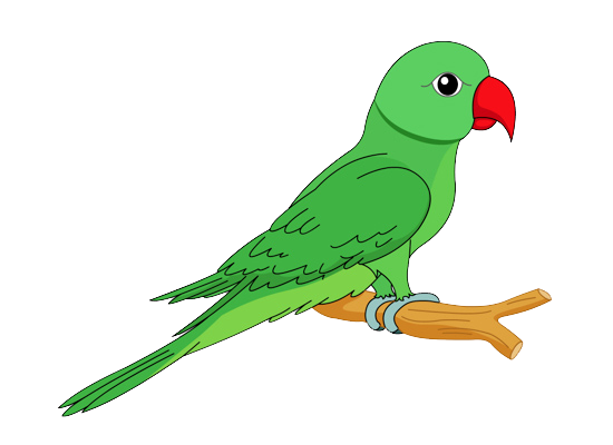 Cilpart unusual ideas hd. Parrot clipart
