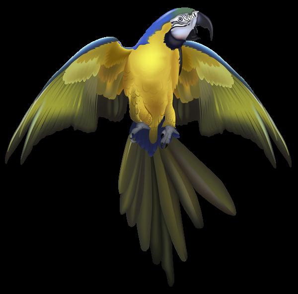 Parrot clipart beautiful parrot. Gallery birds png