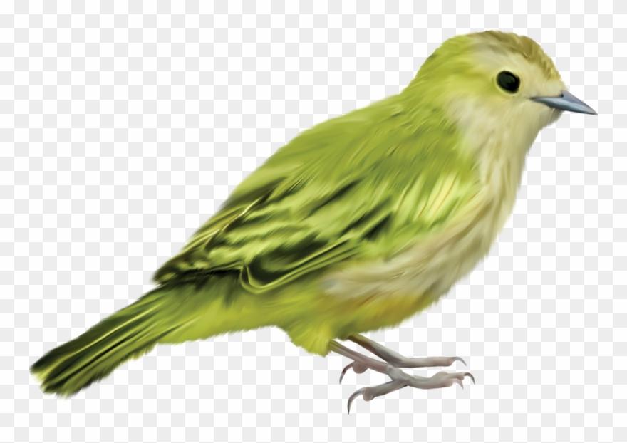 Parrot clipart beautiful parrot. Images bird crafts art