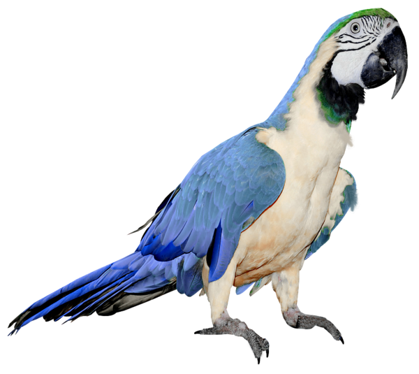Thirteen isolated stock photo. Parrot clipart beautiful parrot
