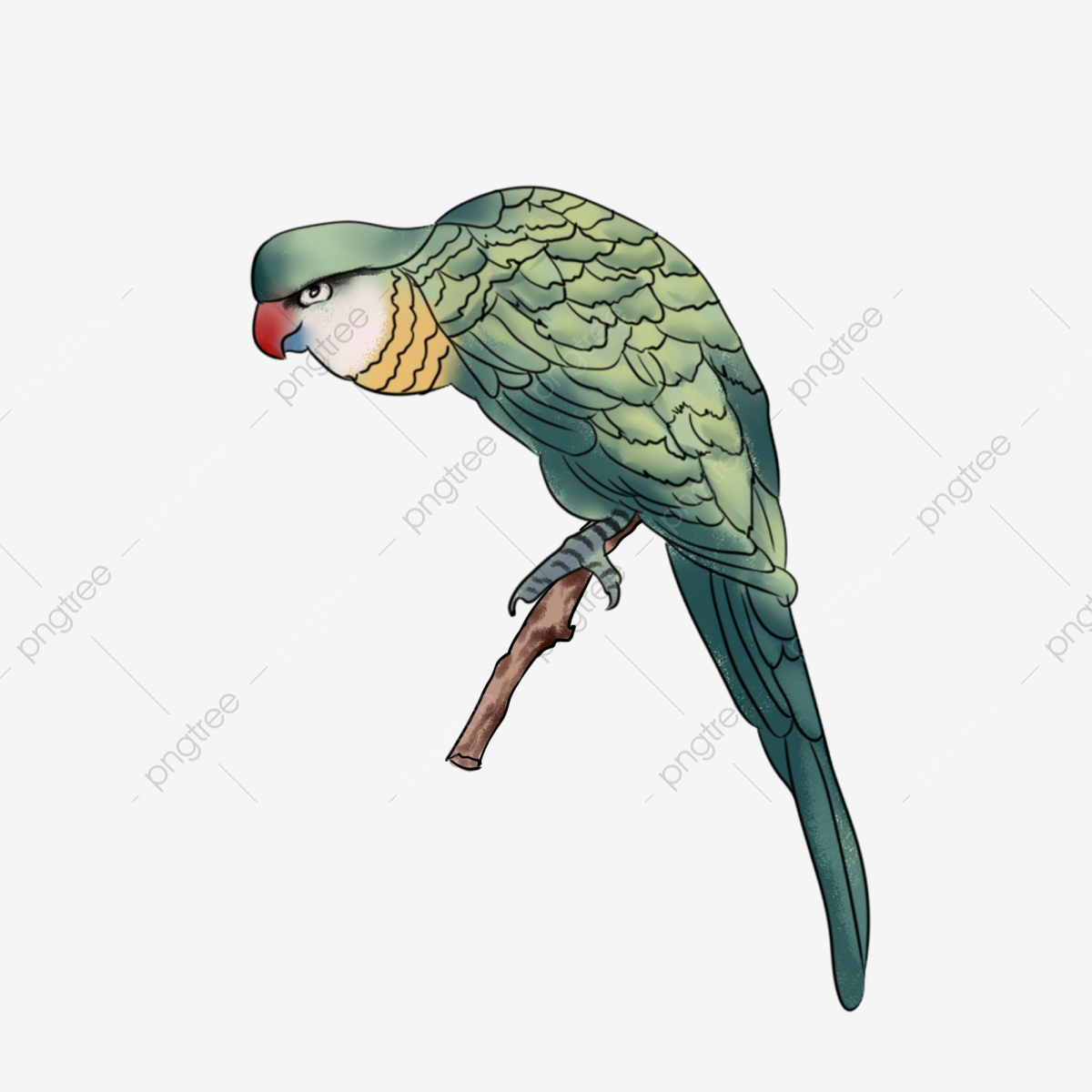 Meticulous cute hand drawn. Parrot clipart beautiful parrot