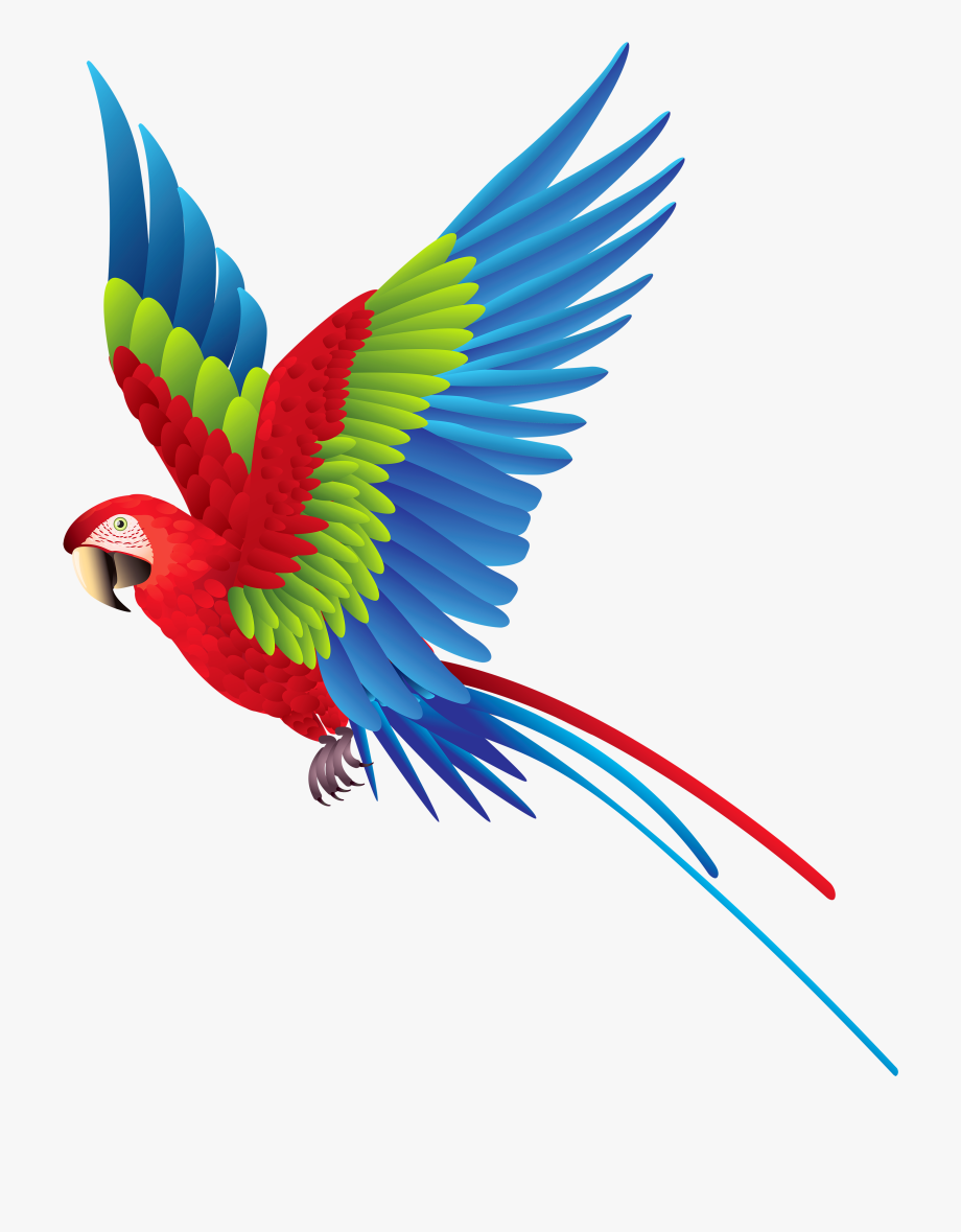 Colourful png colorful flying. Parrot clipart bird fly