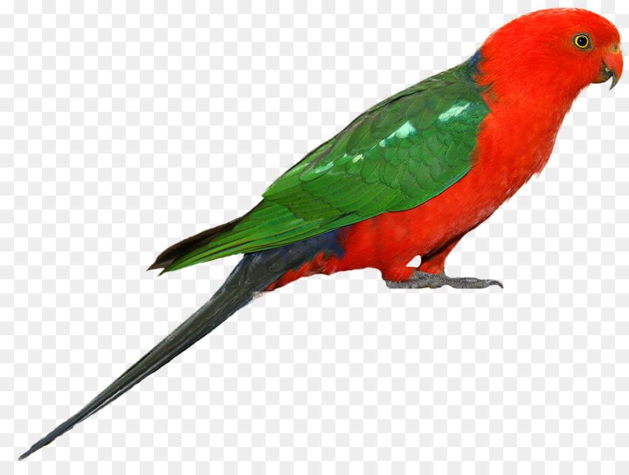 Bird png download free. Parrot clipart bird's