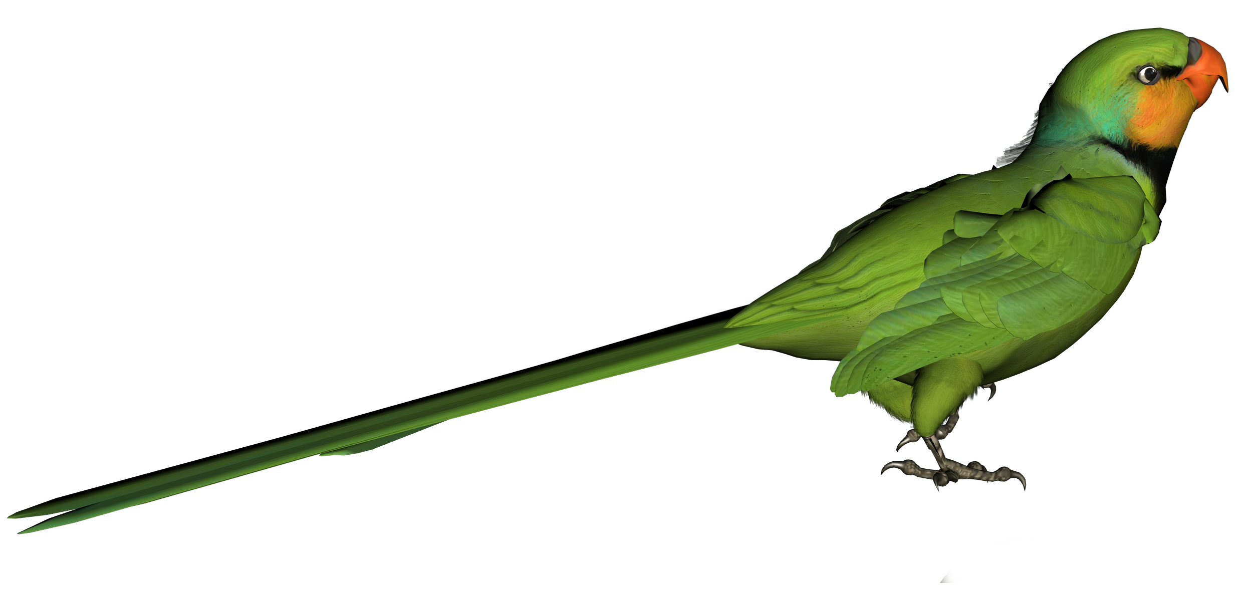 Green png picture gallery. Parrot clipart bird's