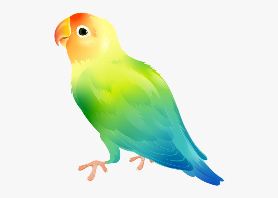 Parrot clipart bird's. Bird png clip art