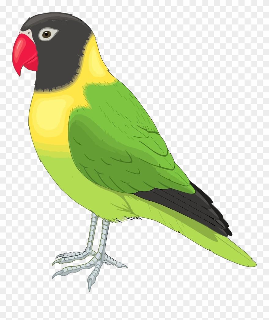 Parrot clipart bird's. Bird pictures clip art