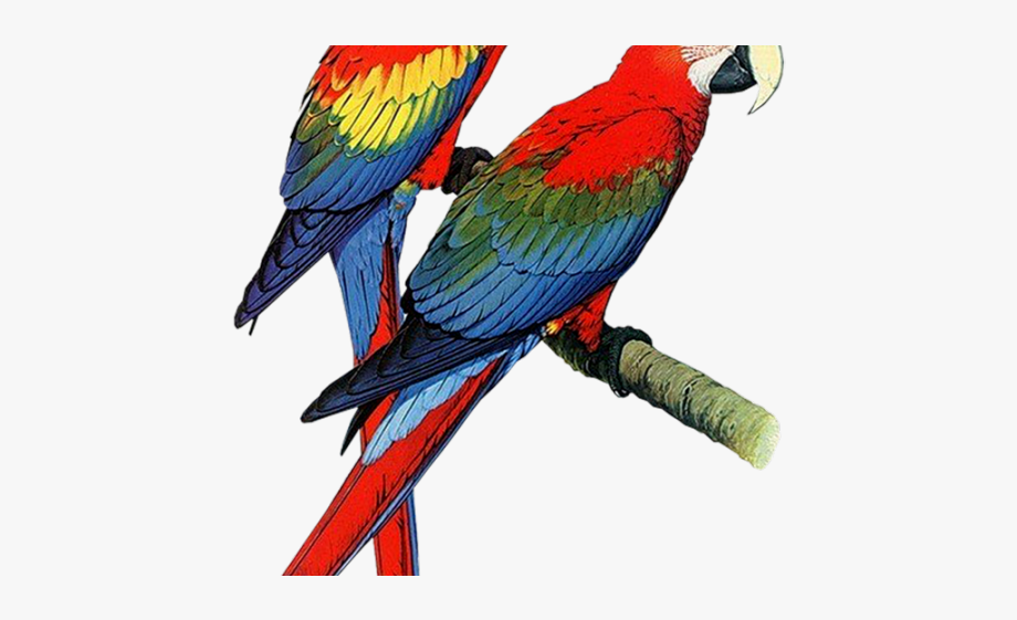 Colored bird colorful flying. Parrot clipart bird's