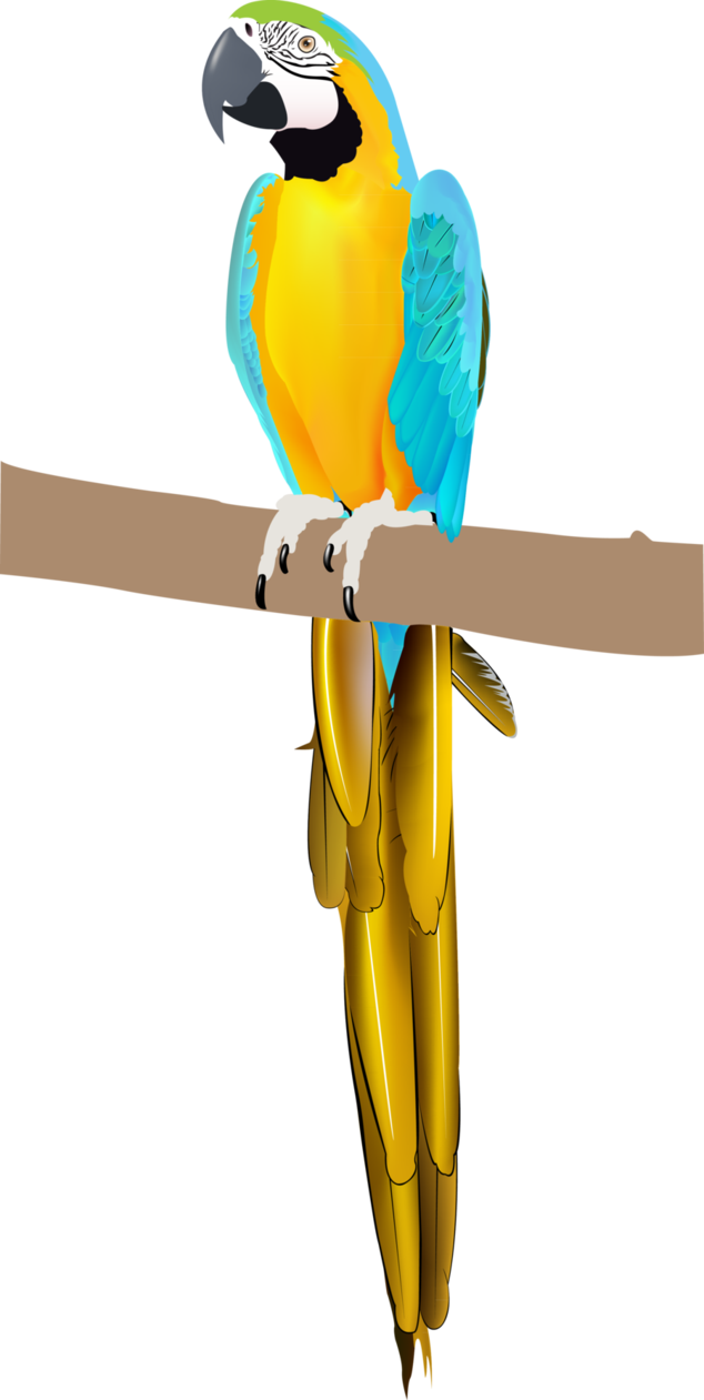 Parrot clipart blue yellow macaw. By iraincloud on deviantart