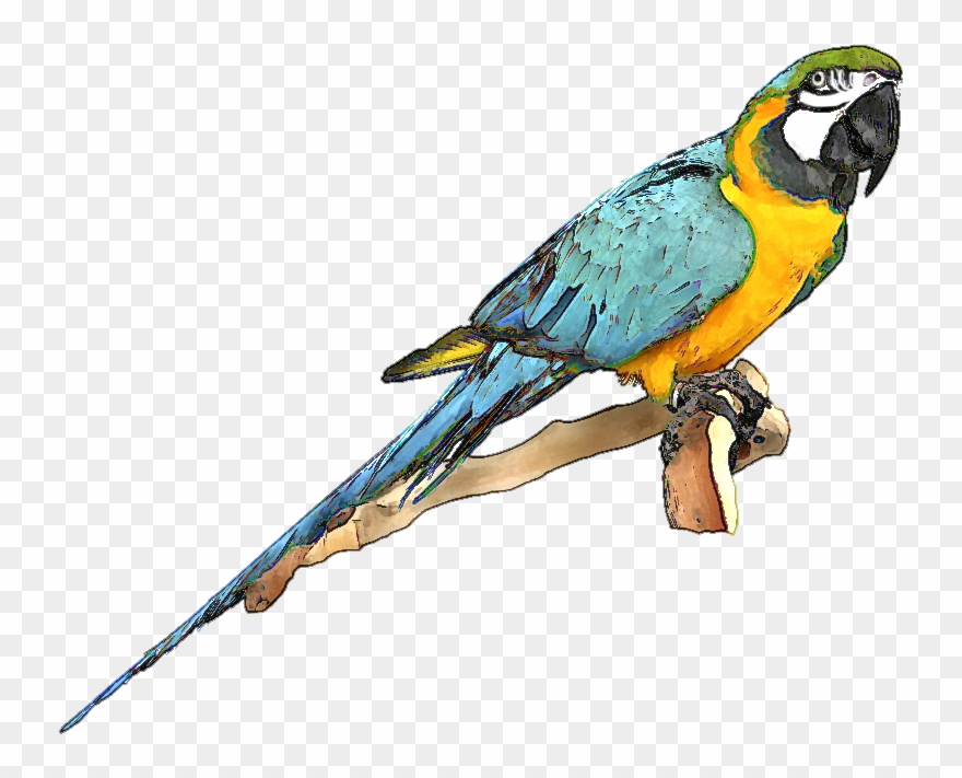 Parrot clipart blue yellow macaw. And gold png download