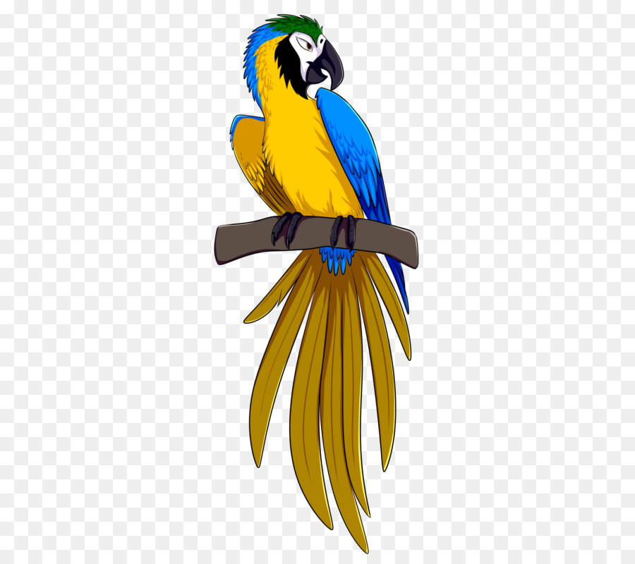 Parrot clipart blue yellow macaw. Rio bird png download