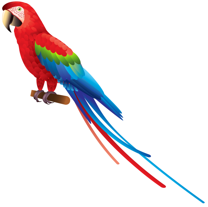White clipart parrot. Png free images toppng