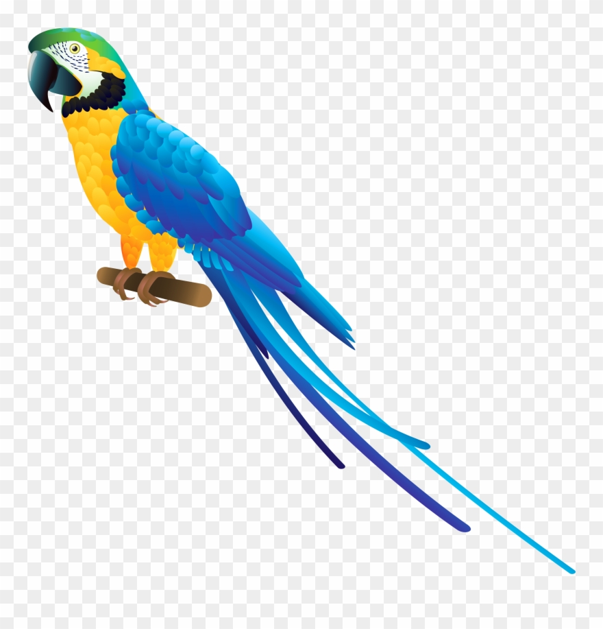 Png and . Parrot clipart blue yellow macaw