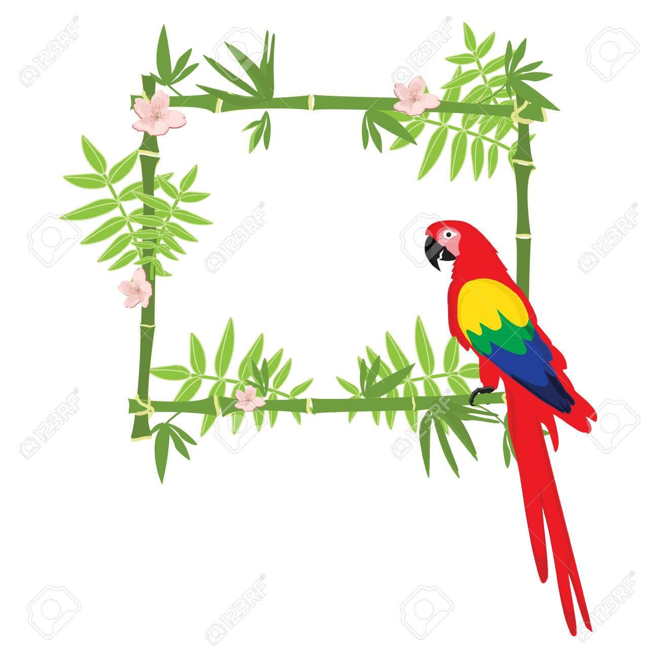 parrot clipart border