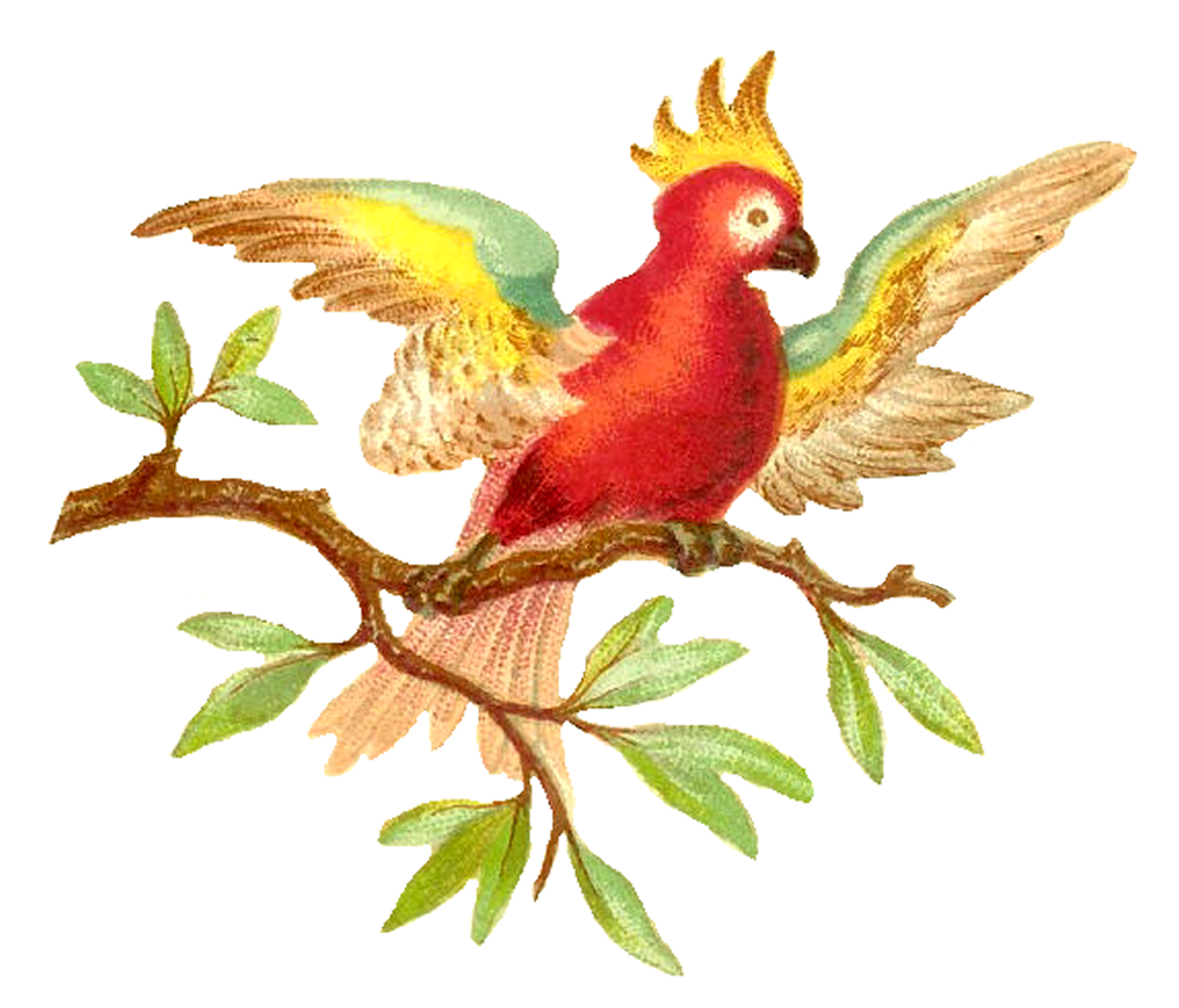Antique images colorful digital. Parrot clipart branch clipart