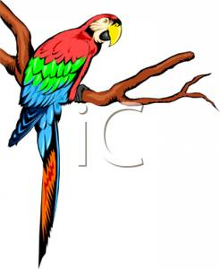 Parrot clipart branch clipart. A colorful on image