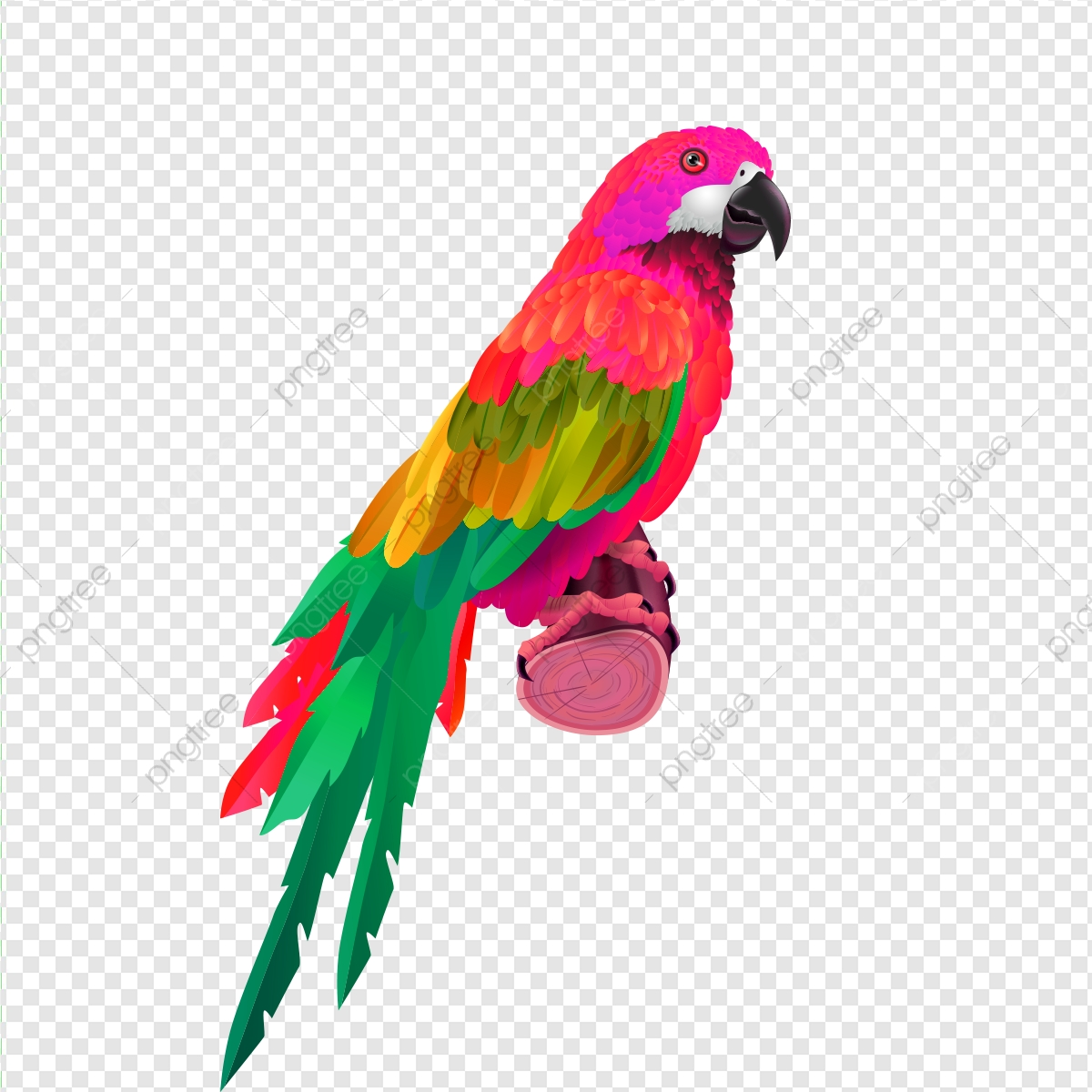 parrot clipart colorful parrot