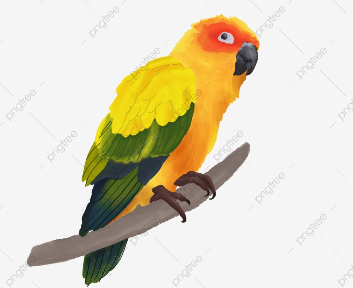 Parrot clipart colour. Colored feathers color feather