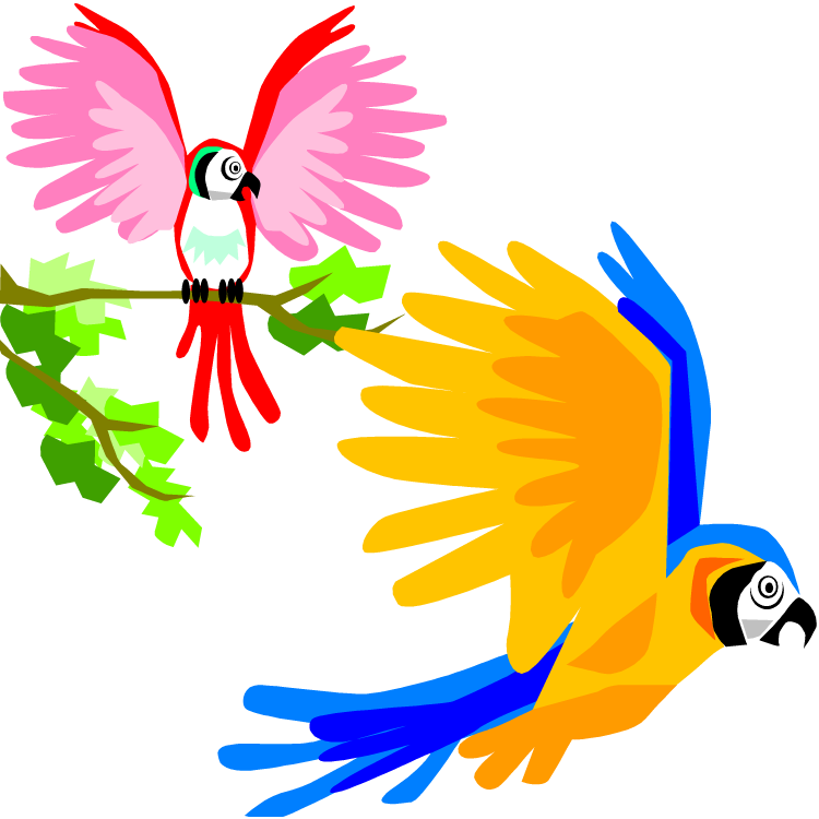 Parrot clipart colourful parrot. Free and macaw flying