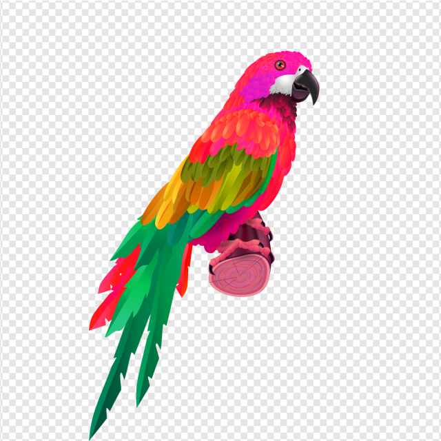 Parrot clipart colourful parrot. Png vector psd and