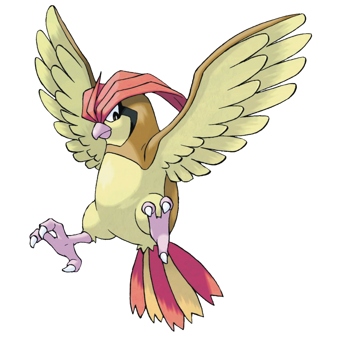 Parrot clipart foot. Pidgeotto the claws on