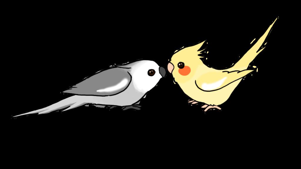 Cute cartoon cockatiels by. Parrot clipart green cheek conure