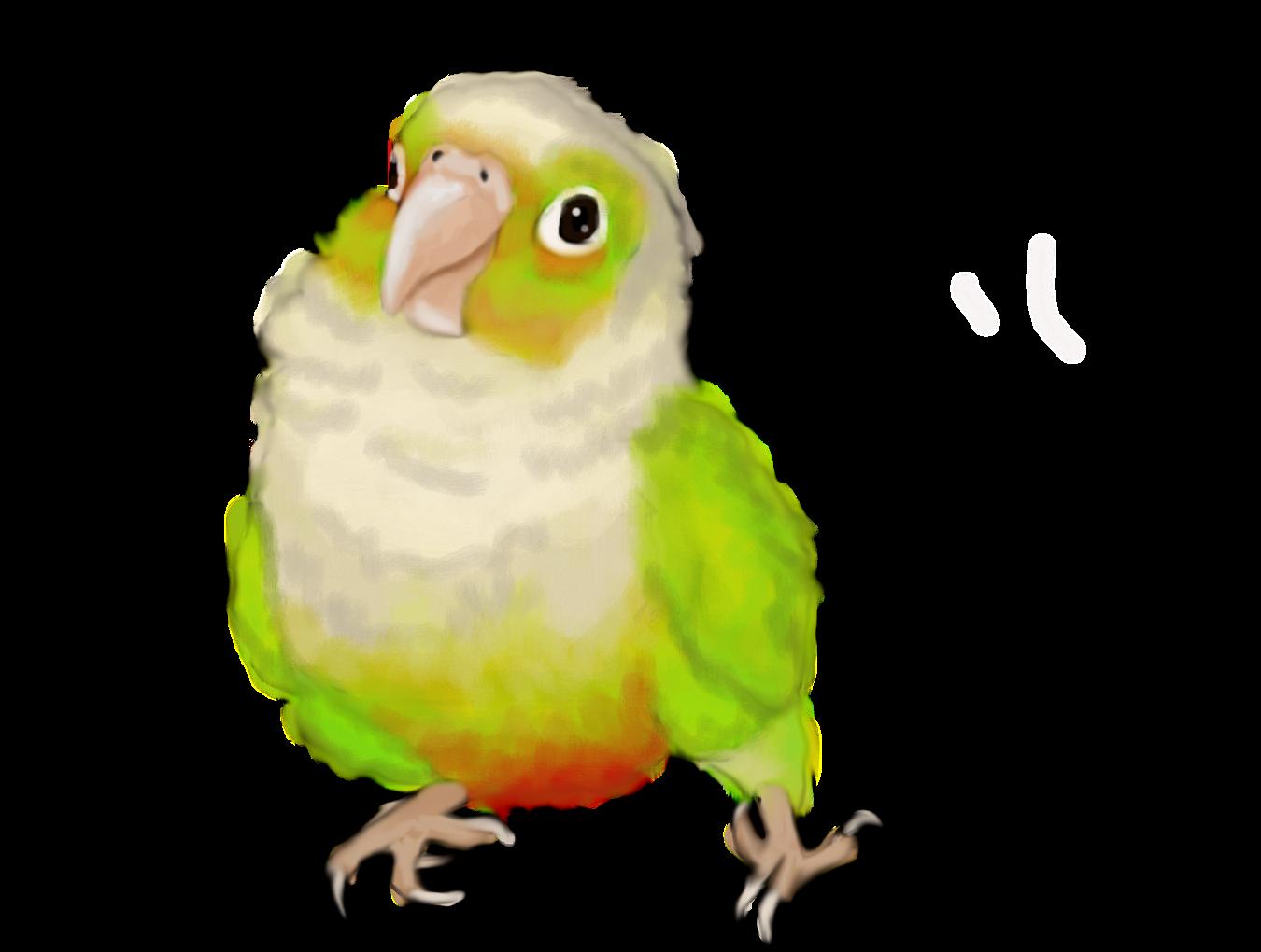 Forum draw a bird. Parrot clipart green cheek conure
