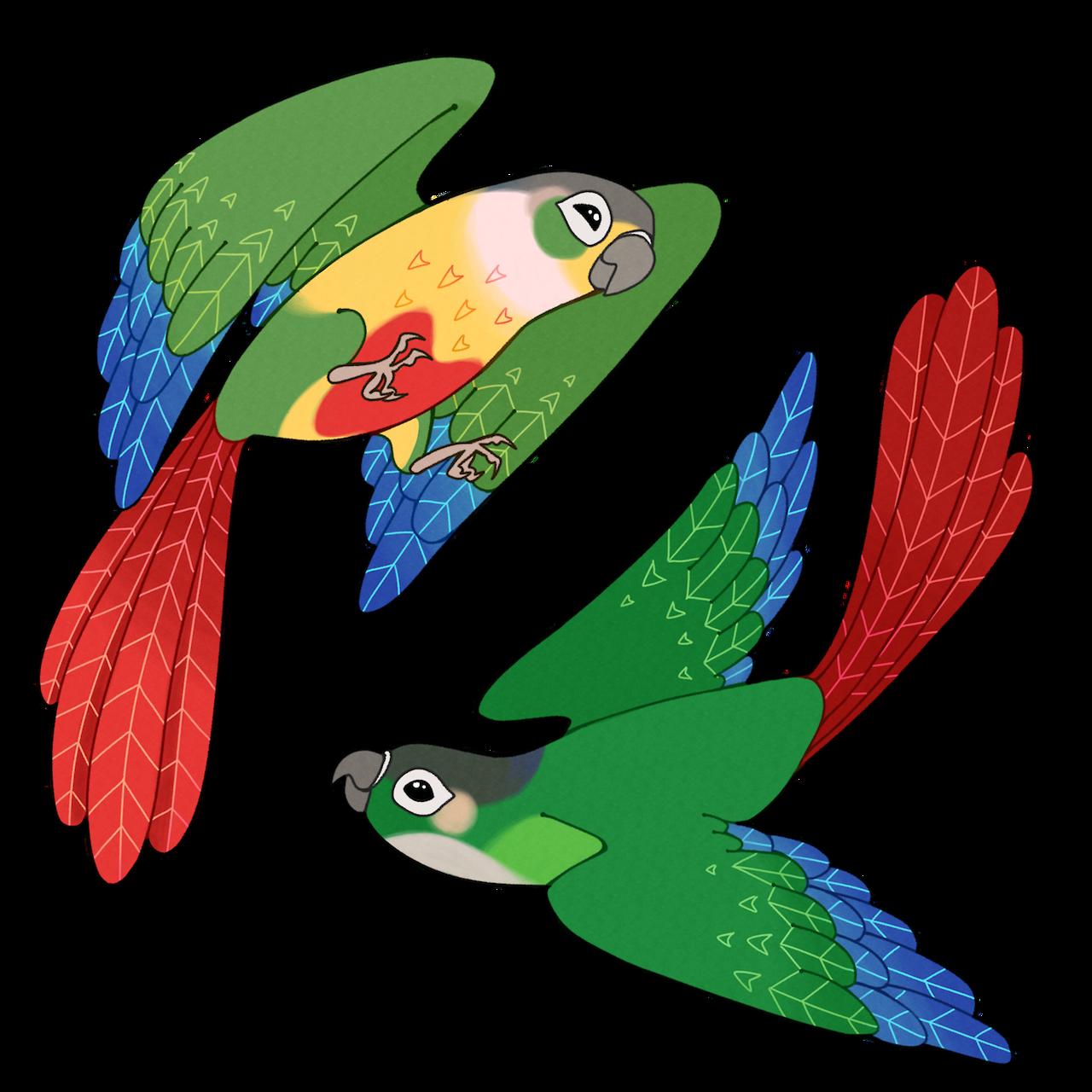 Yellow sided gcc tumblr. Parrot clipart green cheek conure