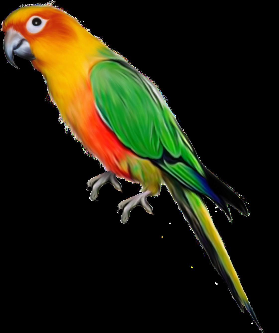 Parrot clipart green cheek conure. Aves png pinterest