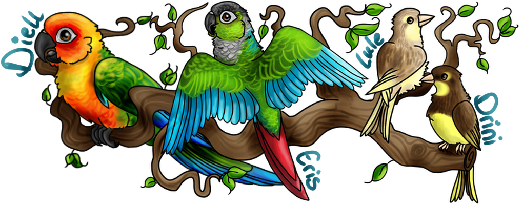 Parrot clipart green cheek conure. Black feathers avian avenue