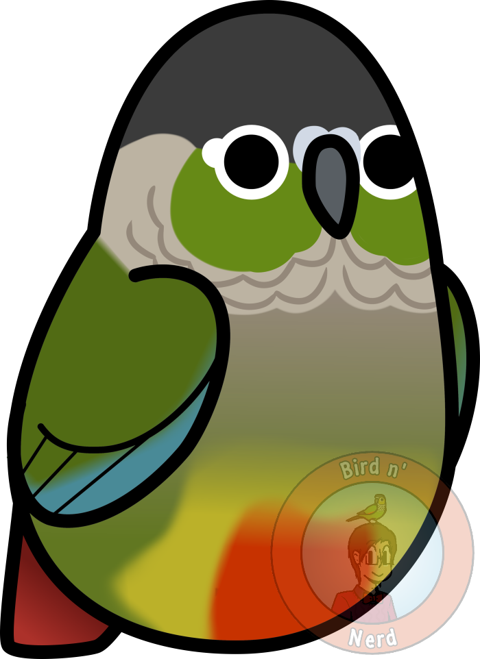 Too many birds cheeked. Parrot clipart green cheek conure