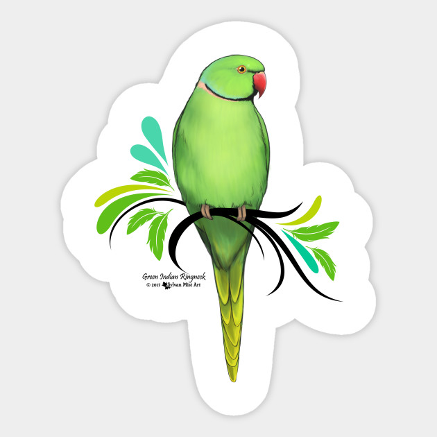 Parrot clipart green indian. Ringneck