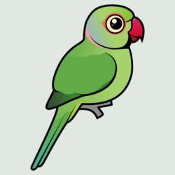 Rose ringed parakeet products. Parrot clipart green indian