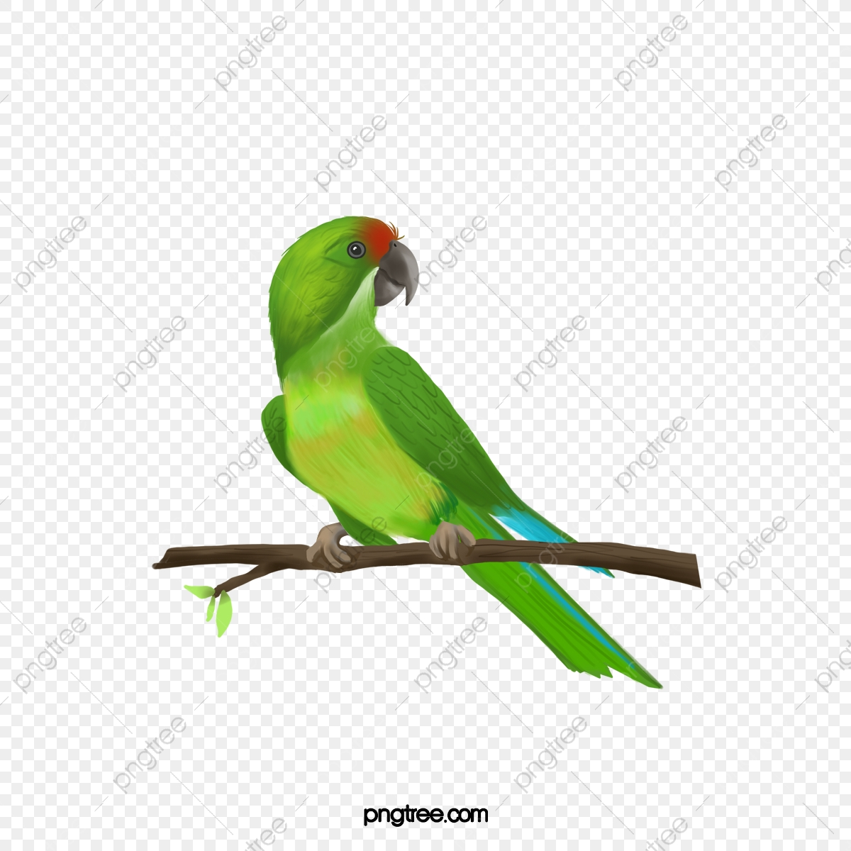 Parrot clipart green parrot. Pictures birds