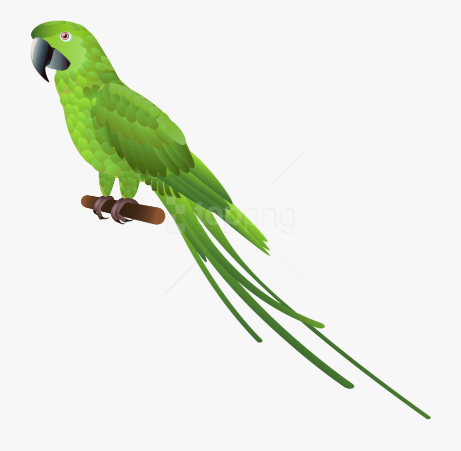 Parrot clipart green parrot. Bird eagle and pigeon