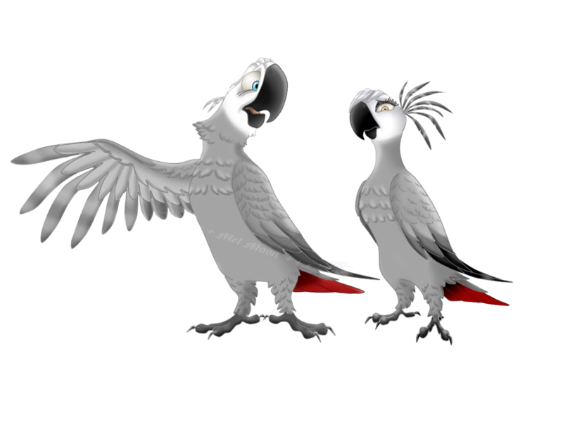 Parrot clipart grey parrot.  collection of african