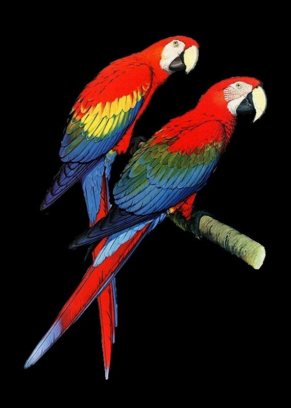 Parrot clipart guacamaya. Photo d qboohavq gkvztinhcgzirz
