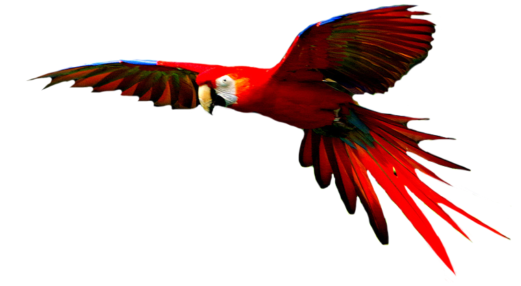Png transparent images all. Parrot clipart hyacinth macaw