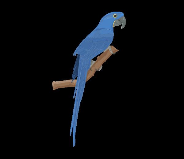 Blue crazywidow info. Parrot clipart hyacinth macaw