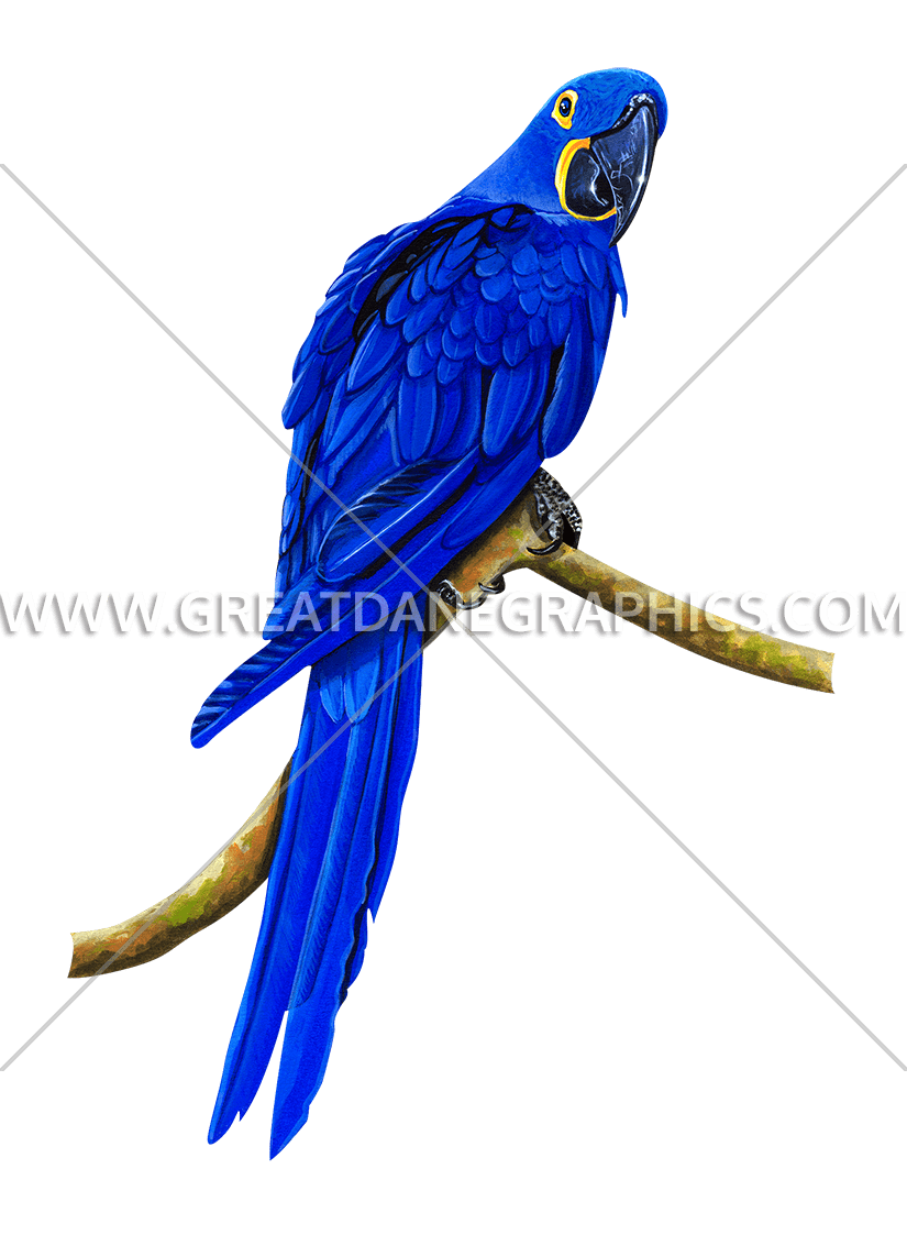 Parrot clipart hyacinth macaw. Blue production ready artwork