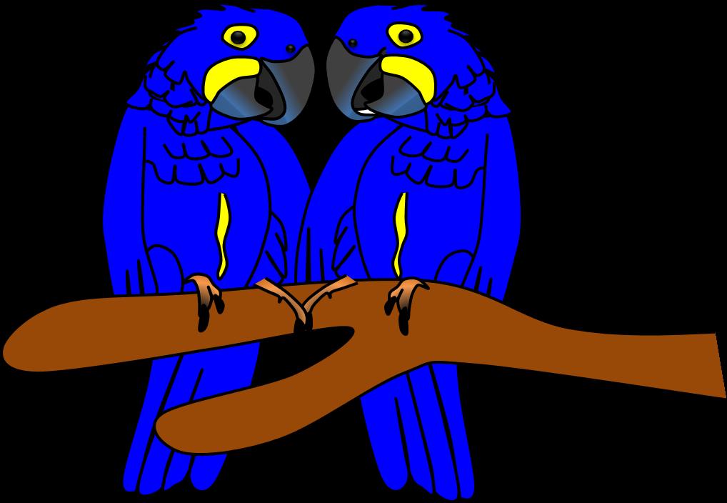 Arara azul imagens animais. Parrot clipart hyacinth macaw