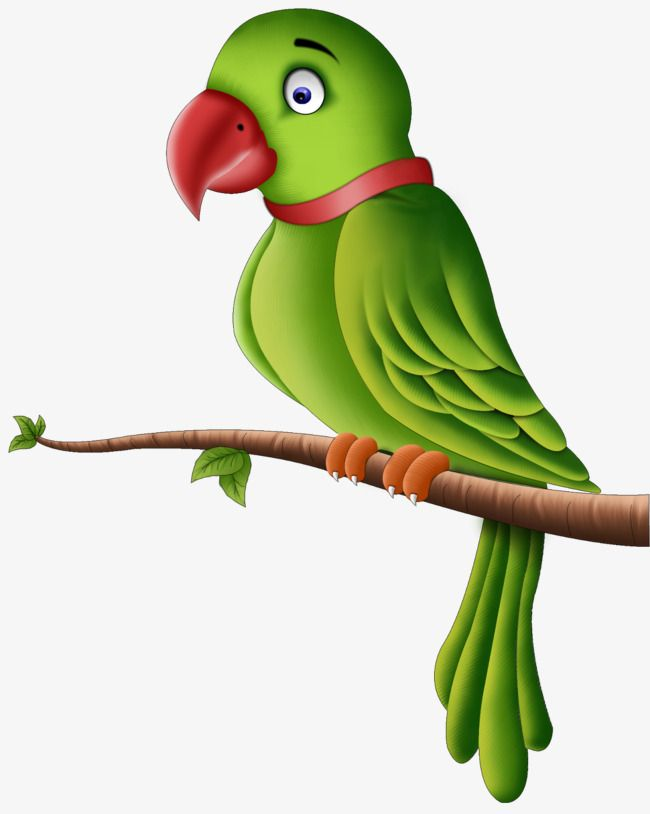 Branches on the aa. Parrot clipart little green