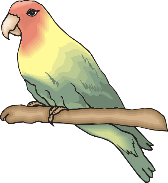 Peachfaced Lovebird Clip Art at Clker